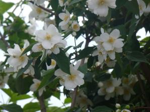 fiori dal giardino del b&b la casa sul colle sestri levante