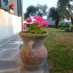 Geranio nel giardino del bed and breakfast la casa sul colle sestri levante