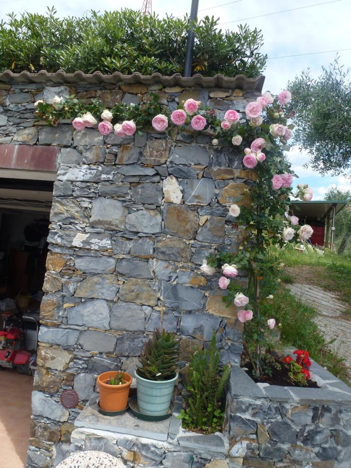Rose rampicanti giardino b&b